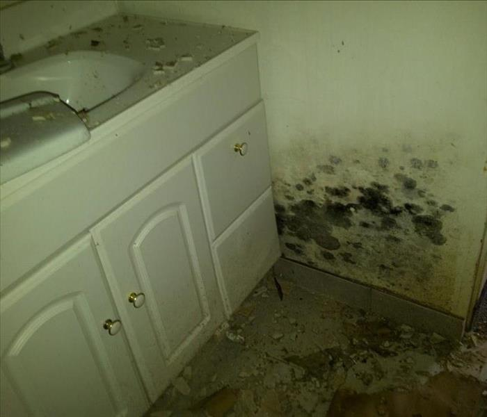 Leak Under Bathroom Sink Causes Mold