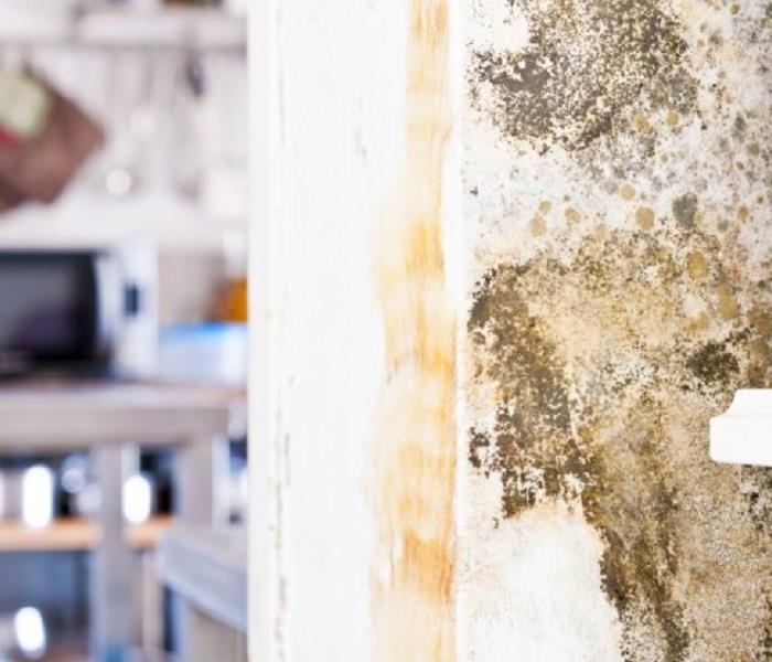 Mold vs mildew servpro of st augustine - How to deal with mold ...